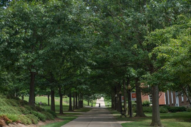 Trees lining the sidewalk outside Miller Hall